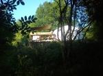 Shady woods Sunny glade