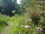 Wild flower meadow path